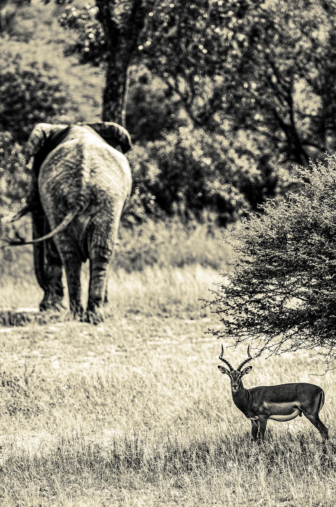 Photographe : wild life n°18