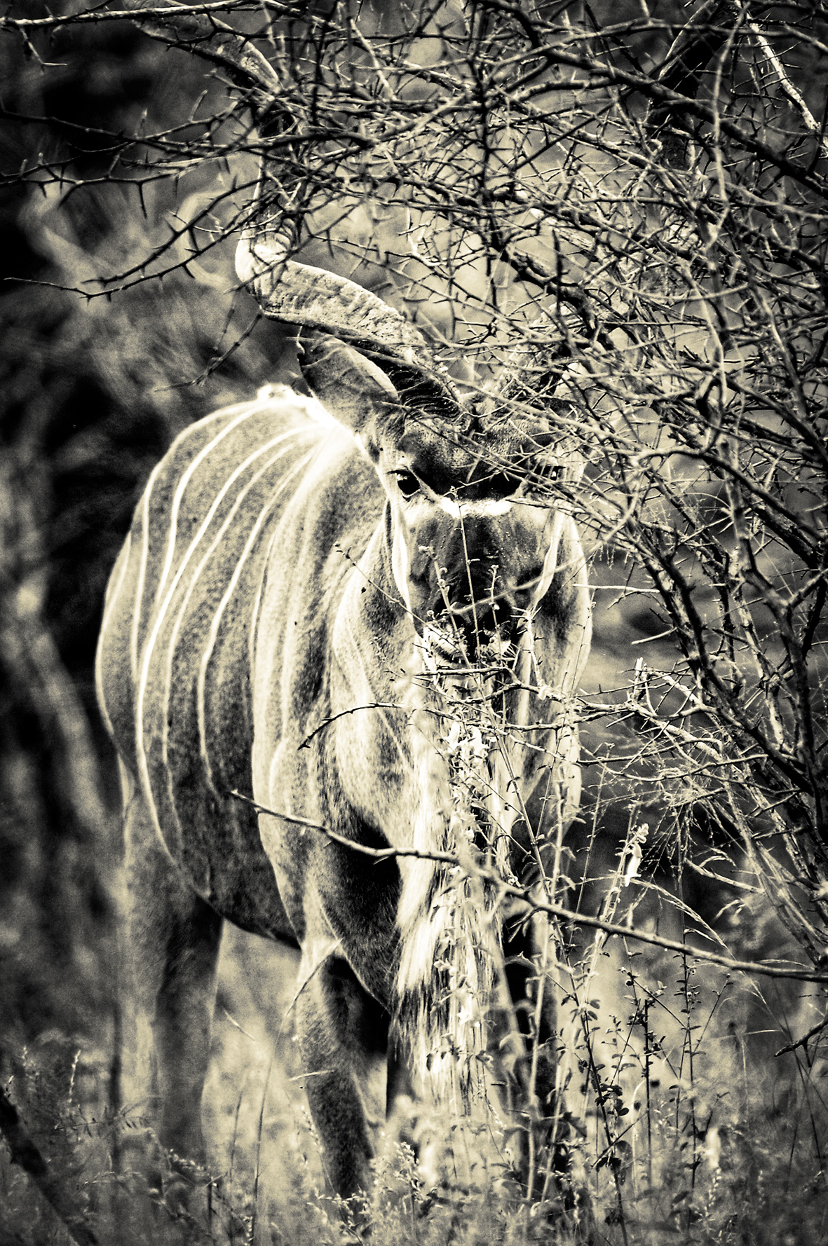 Photographe : wild life n°19