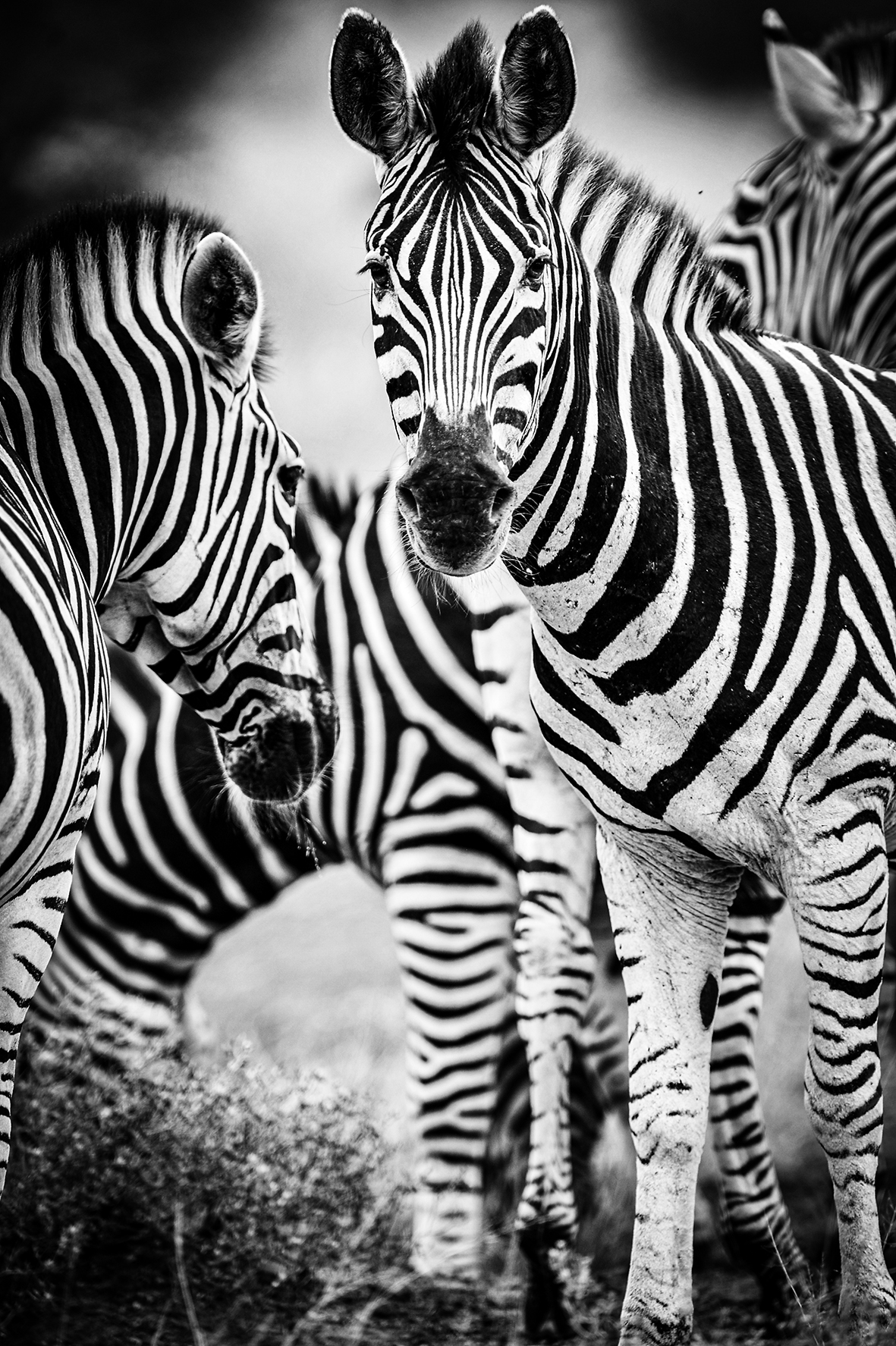 Photographe : wild life n°22