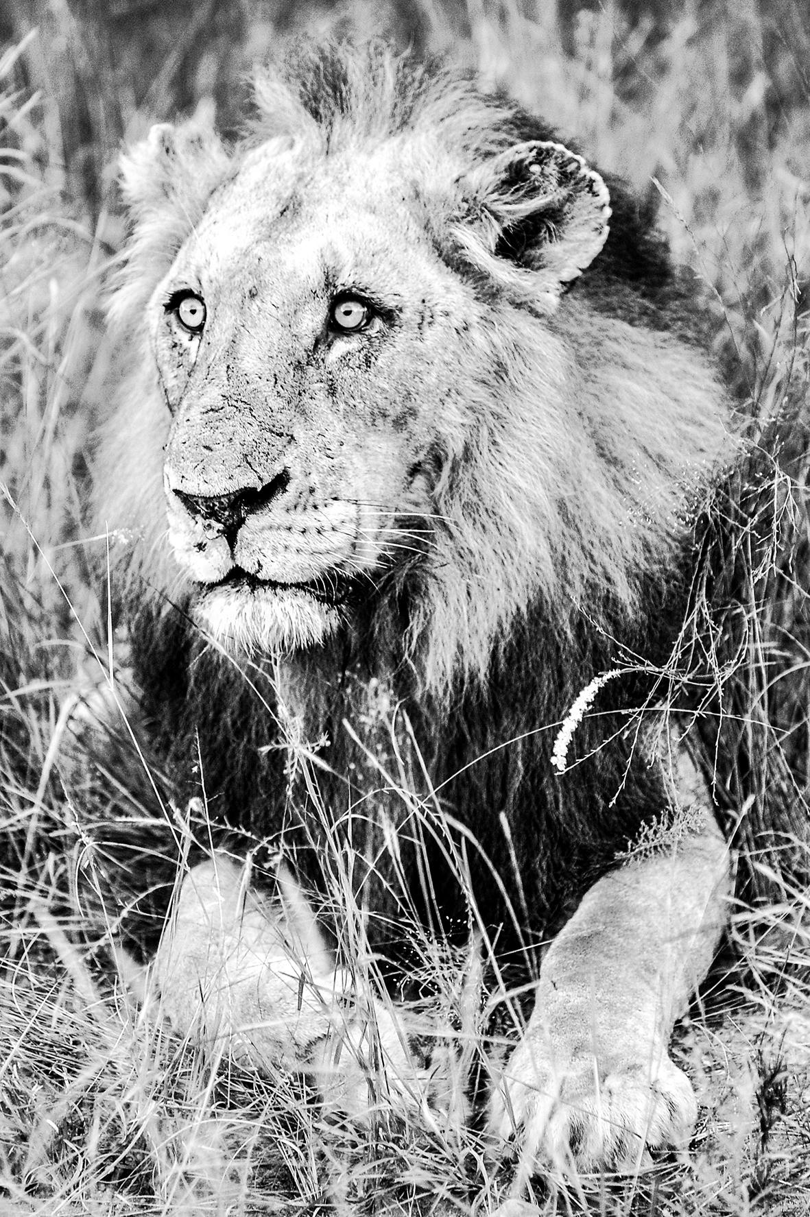 Photographe : wild life n°17