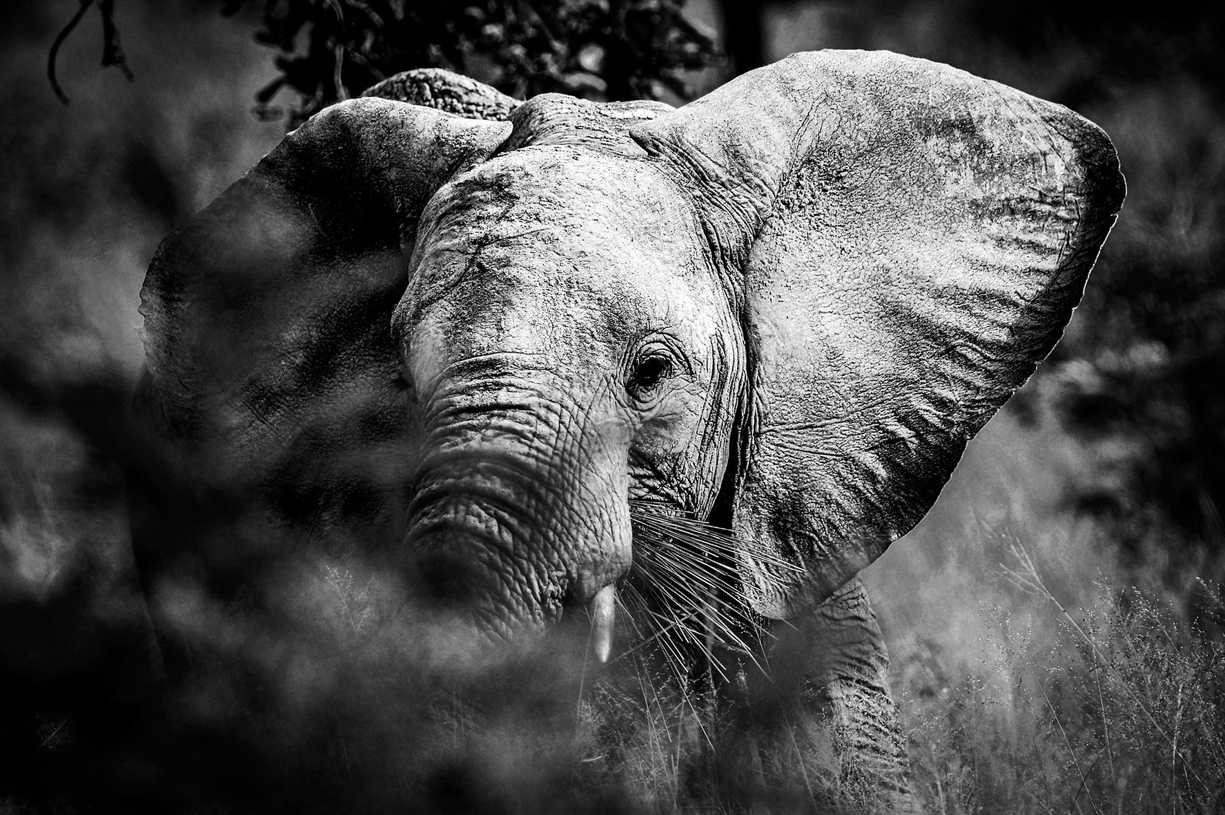 Photographe : wild life n°2