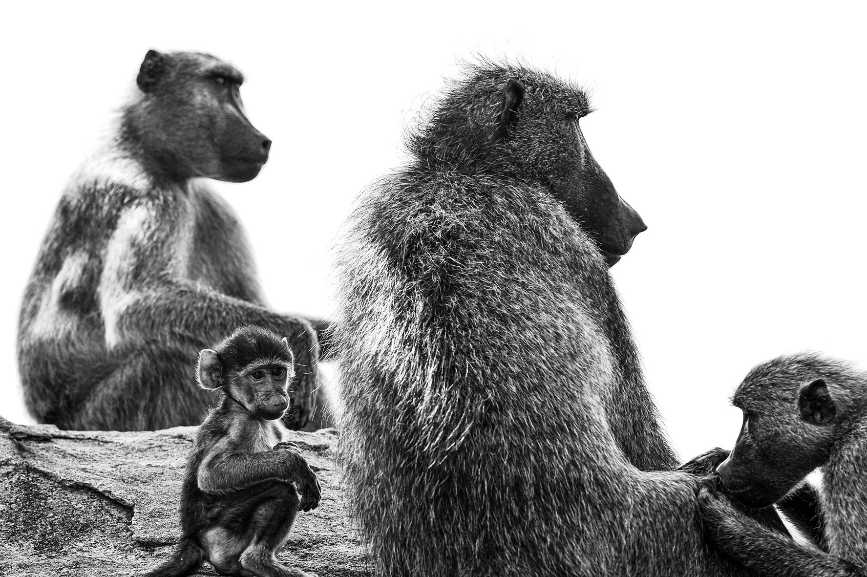 Photographe : wild life n°3