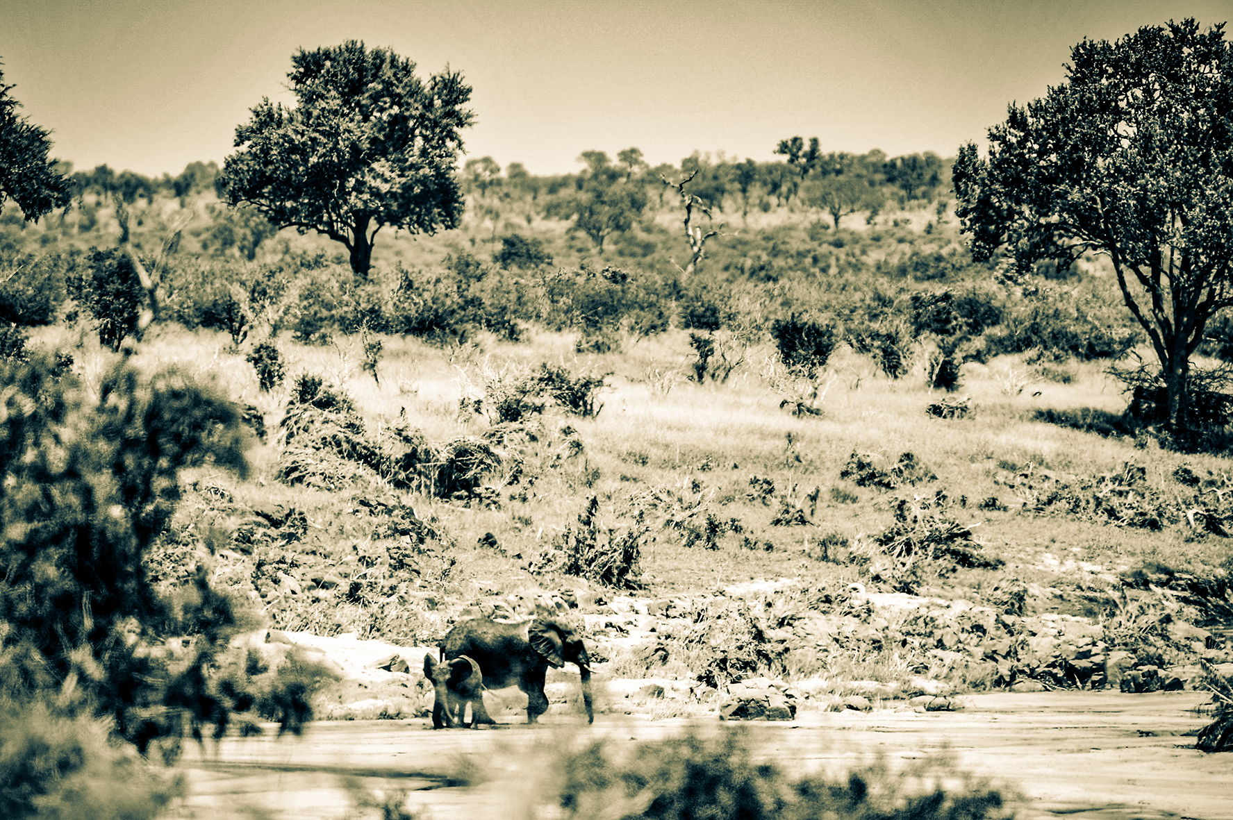 Photographe : wild life n°4