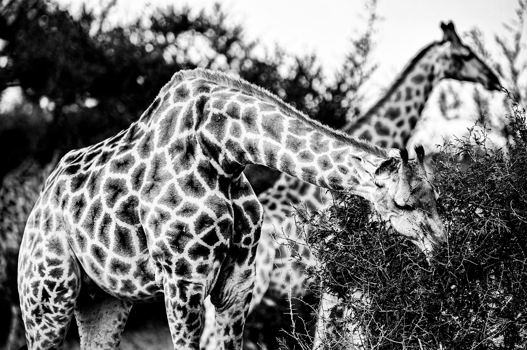 Photographe : wild life n°7