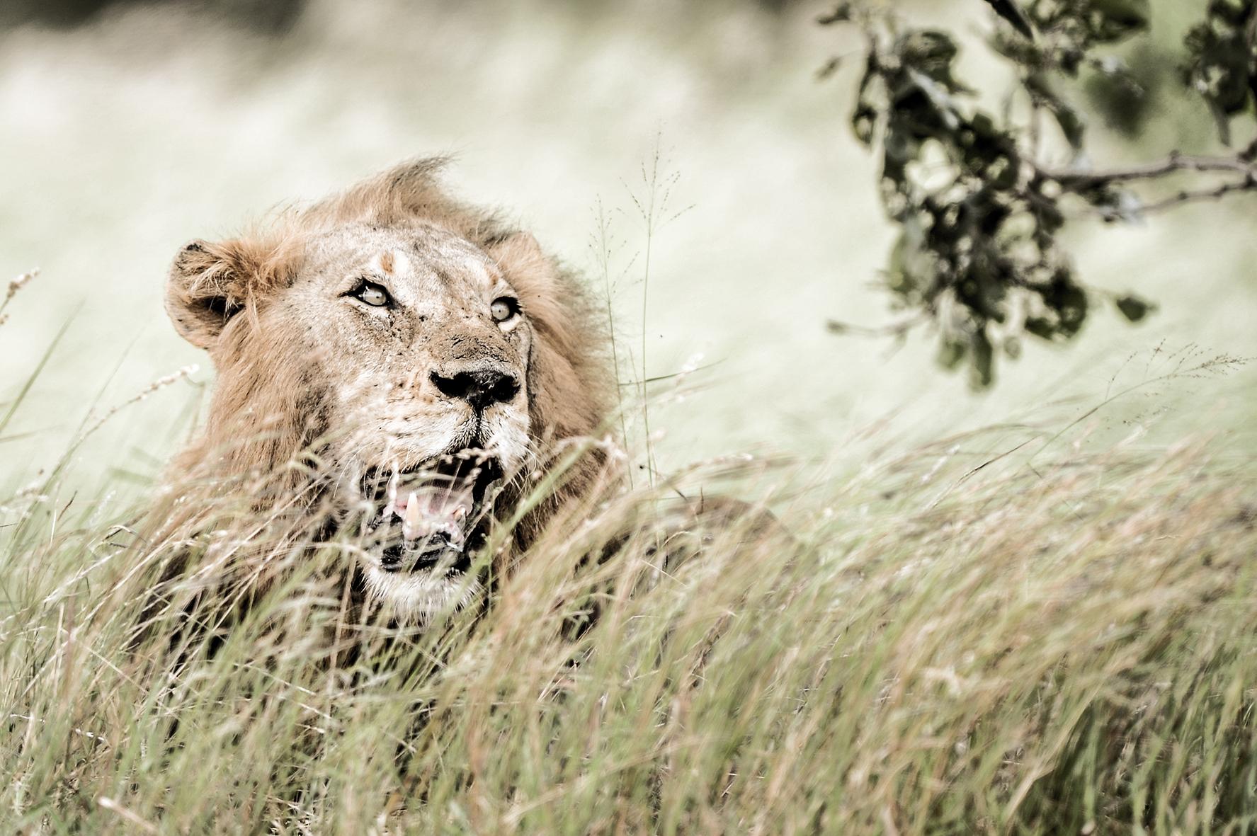 Photographe : wild life n°8