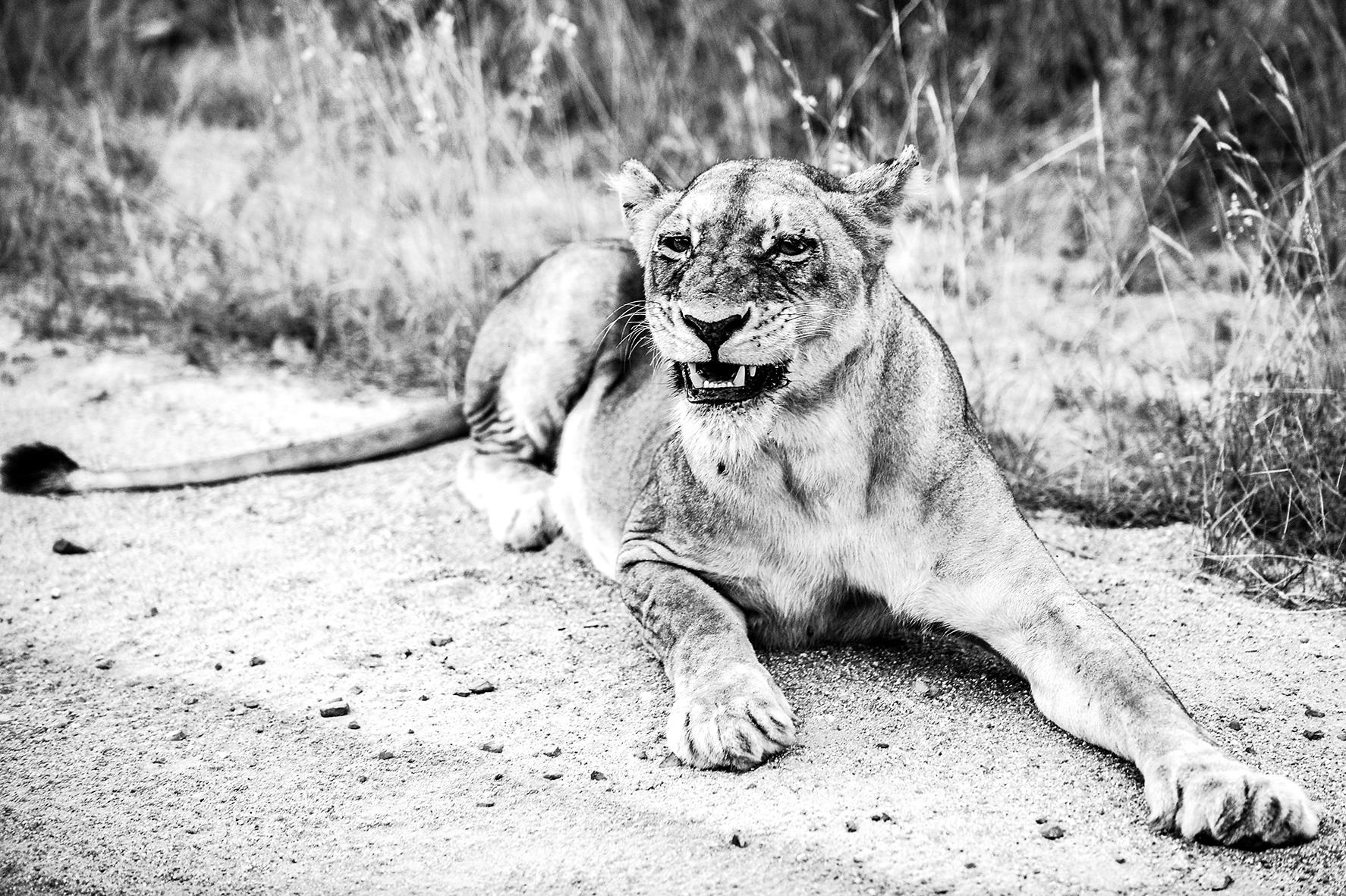 Photographe : wild life n°10