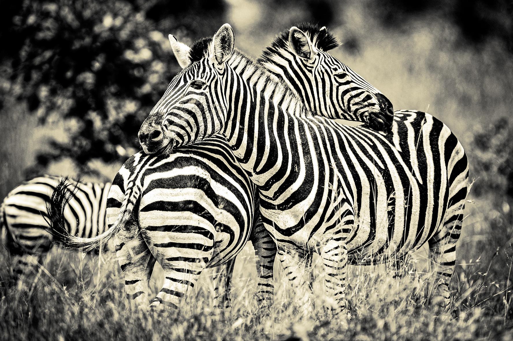 Photographe : wild life n°11
