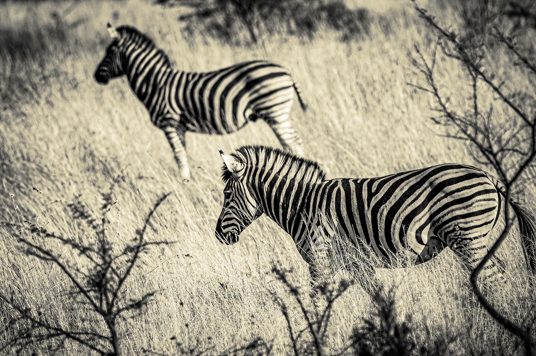Photographe : wild life n°13