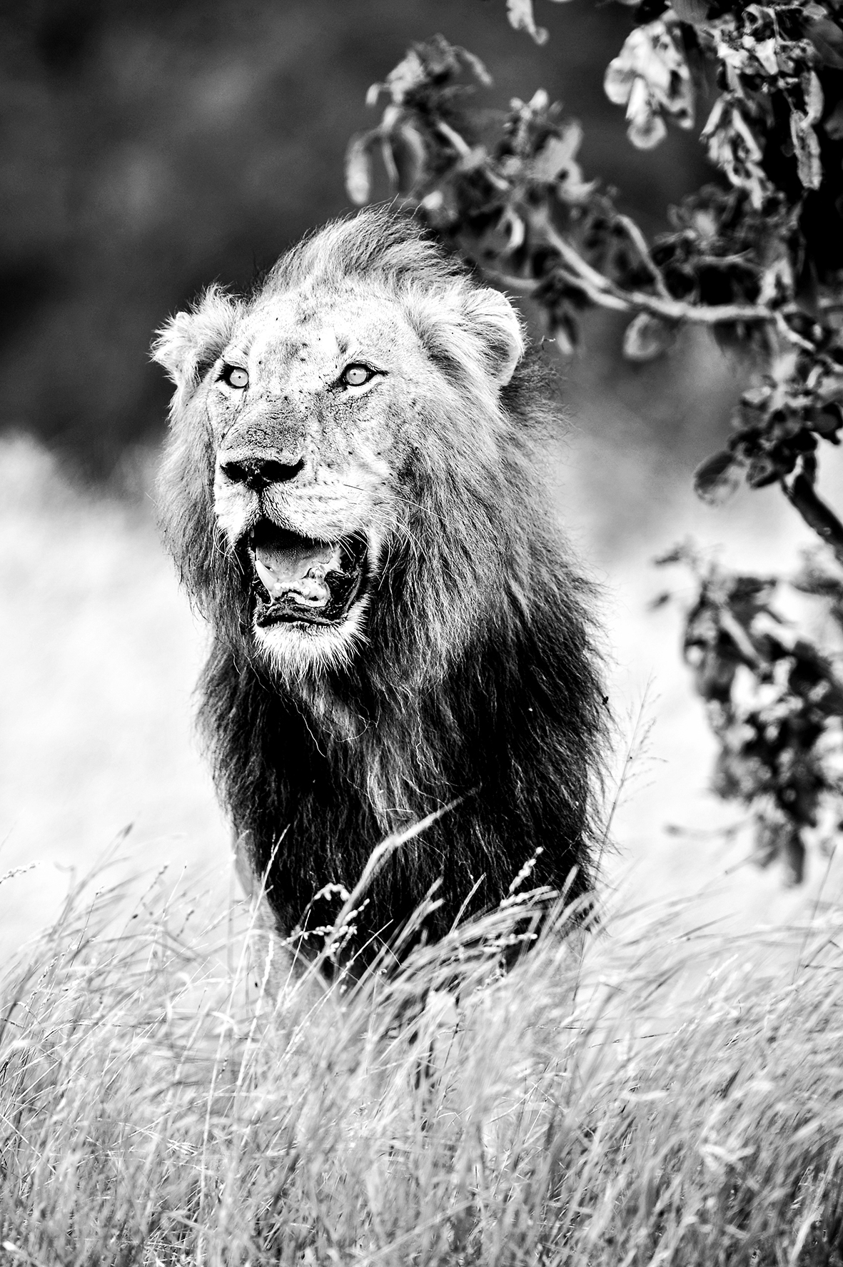 Photographe : Wild life Home