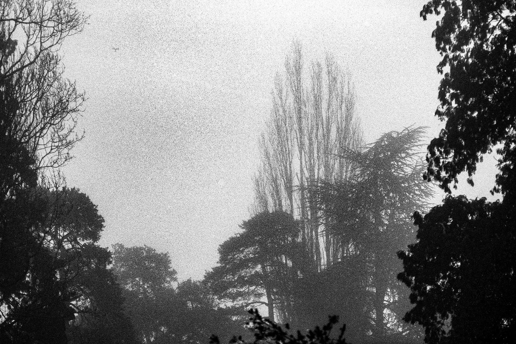 Photographe : Le graphisme naturel n°18
