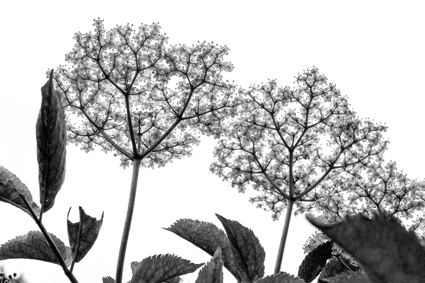 Photographe : Le graphisme naturel n°19