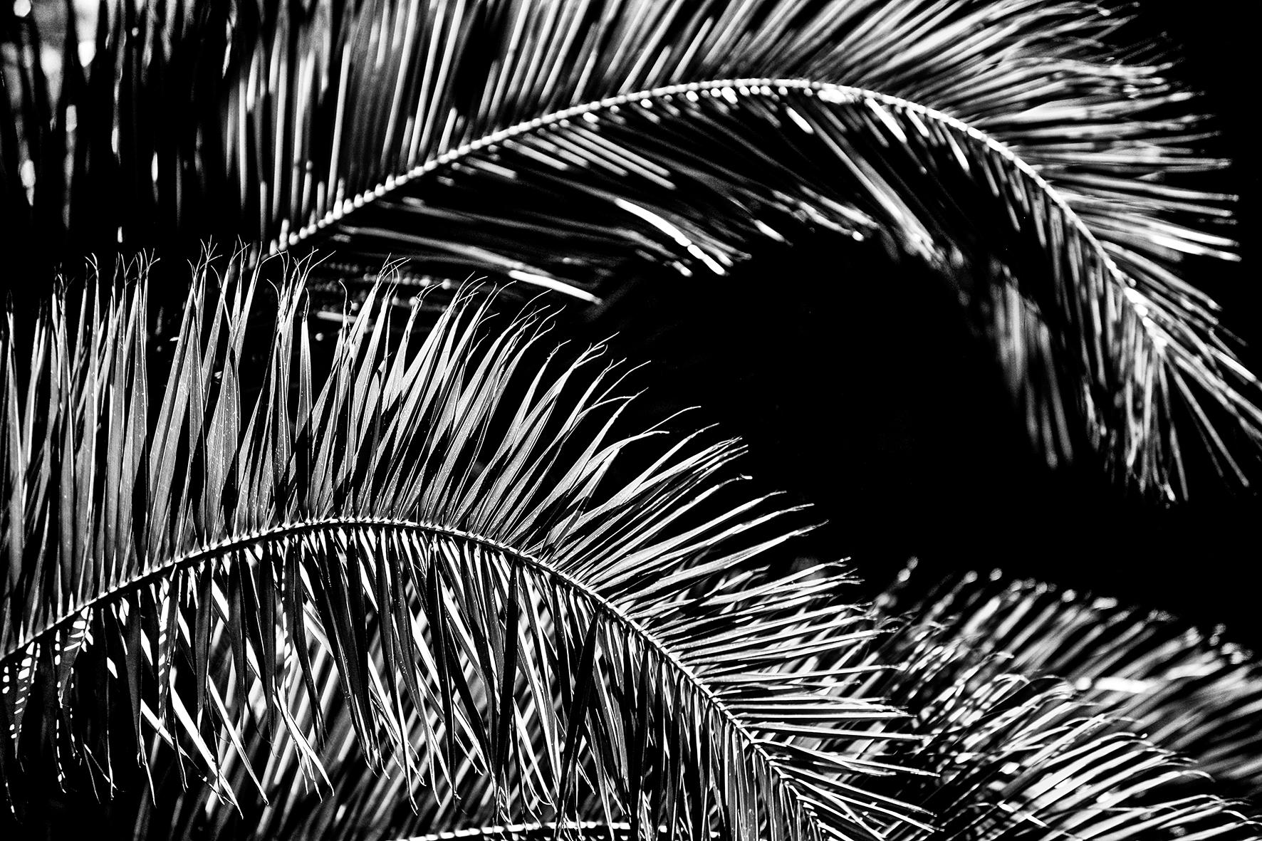 Photographe : Le graphisme naturel n°4