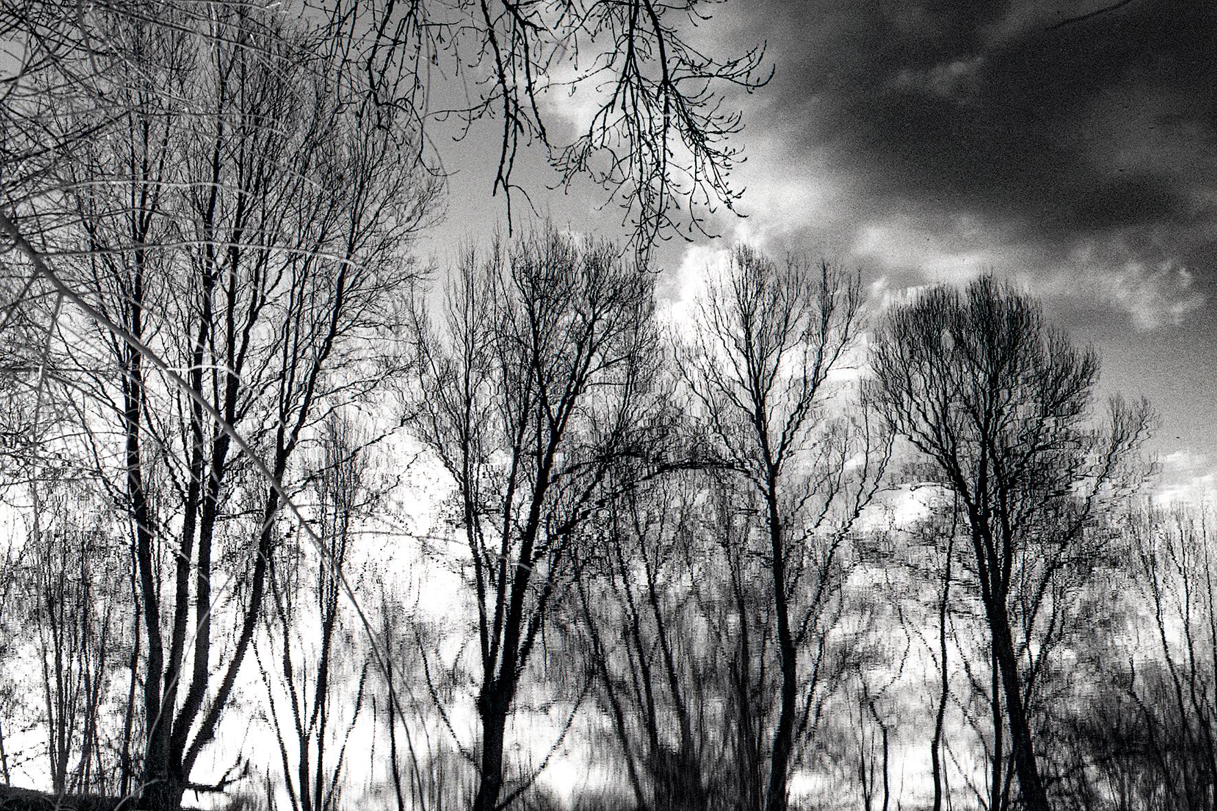 Photographe : Le graphisme naturel n°5