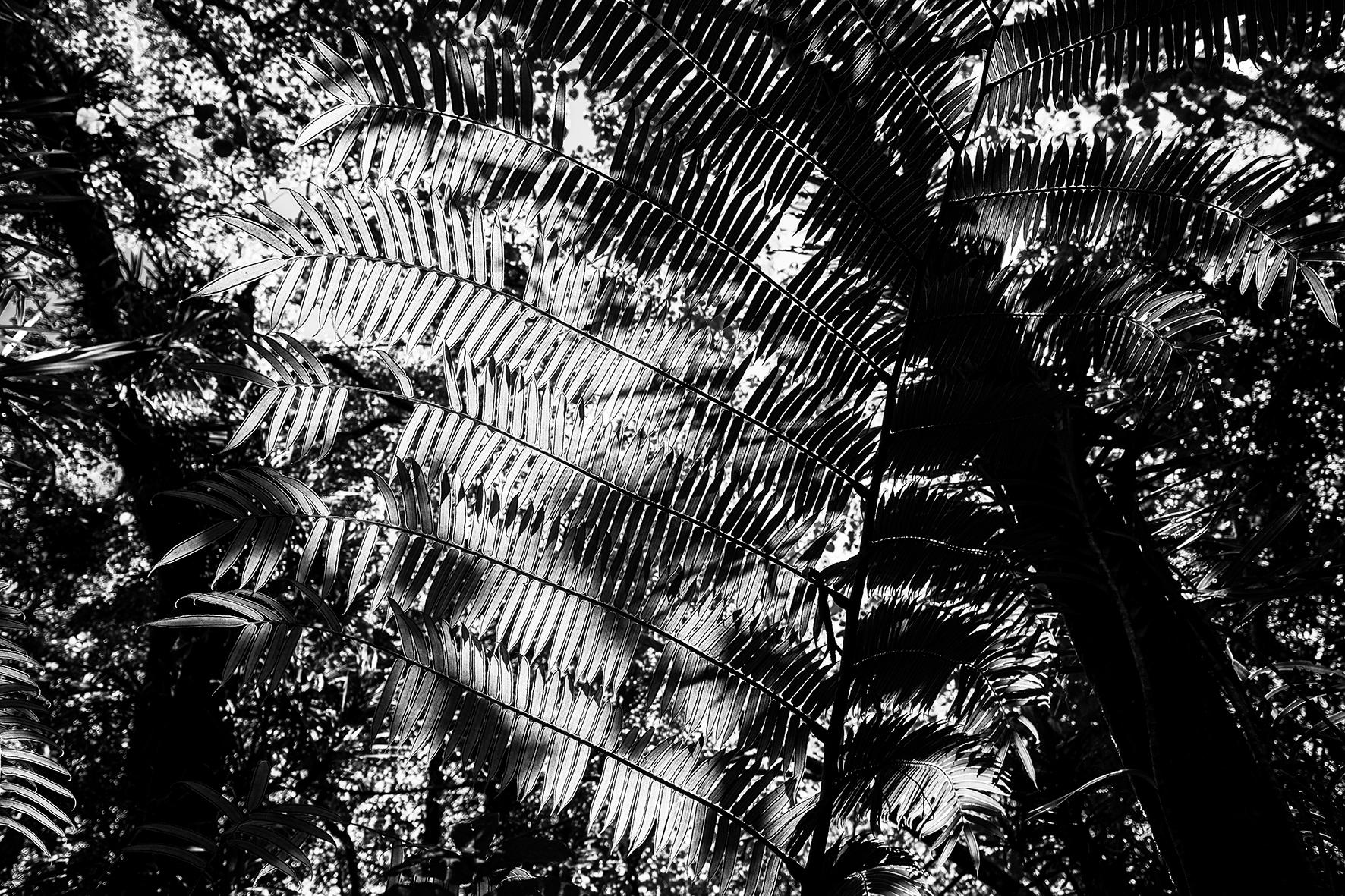 Photographe : Le graphisme naturel n°6