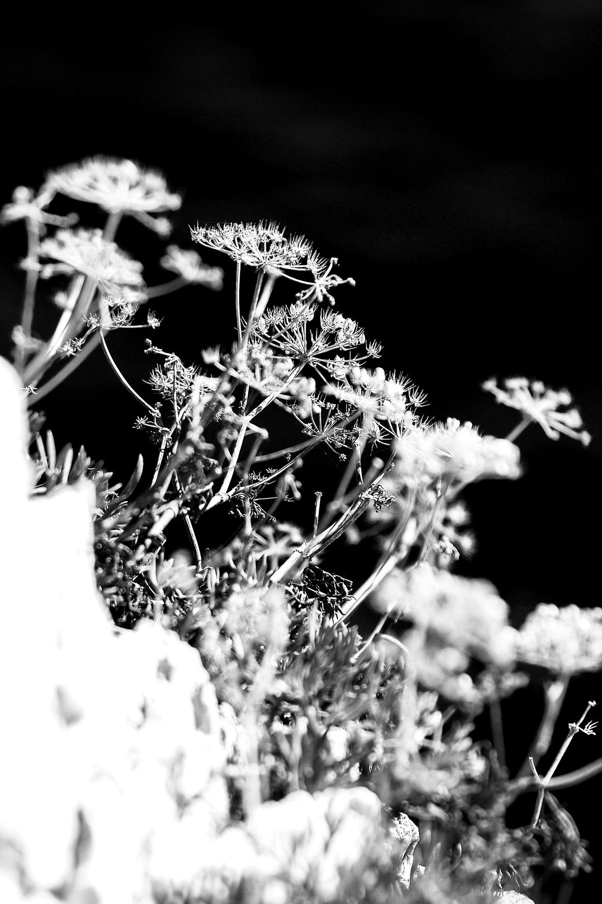 Photographe : Le graphisme naturel n°11