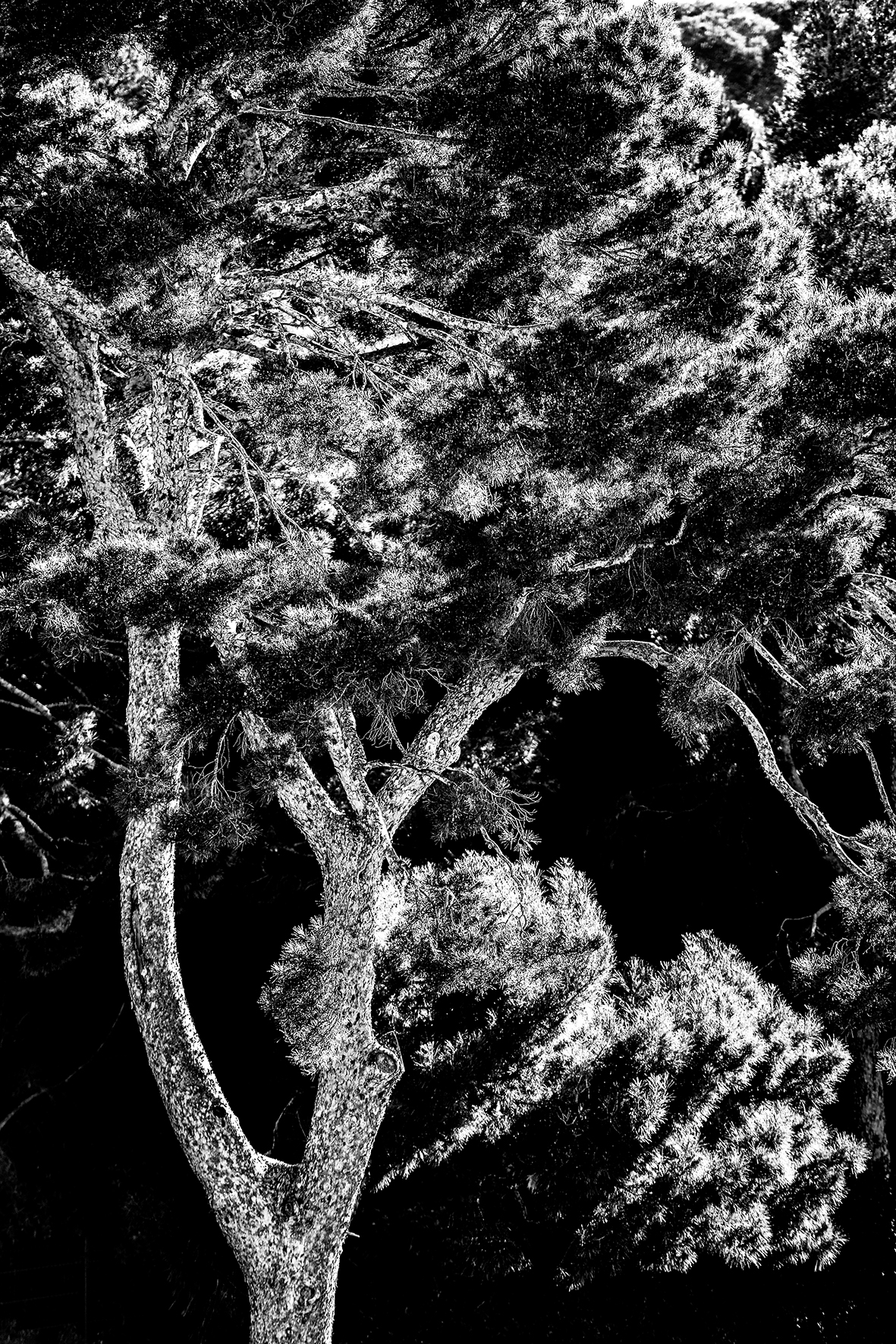 Photographe : Le graphisme naturel n°13
