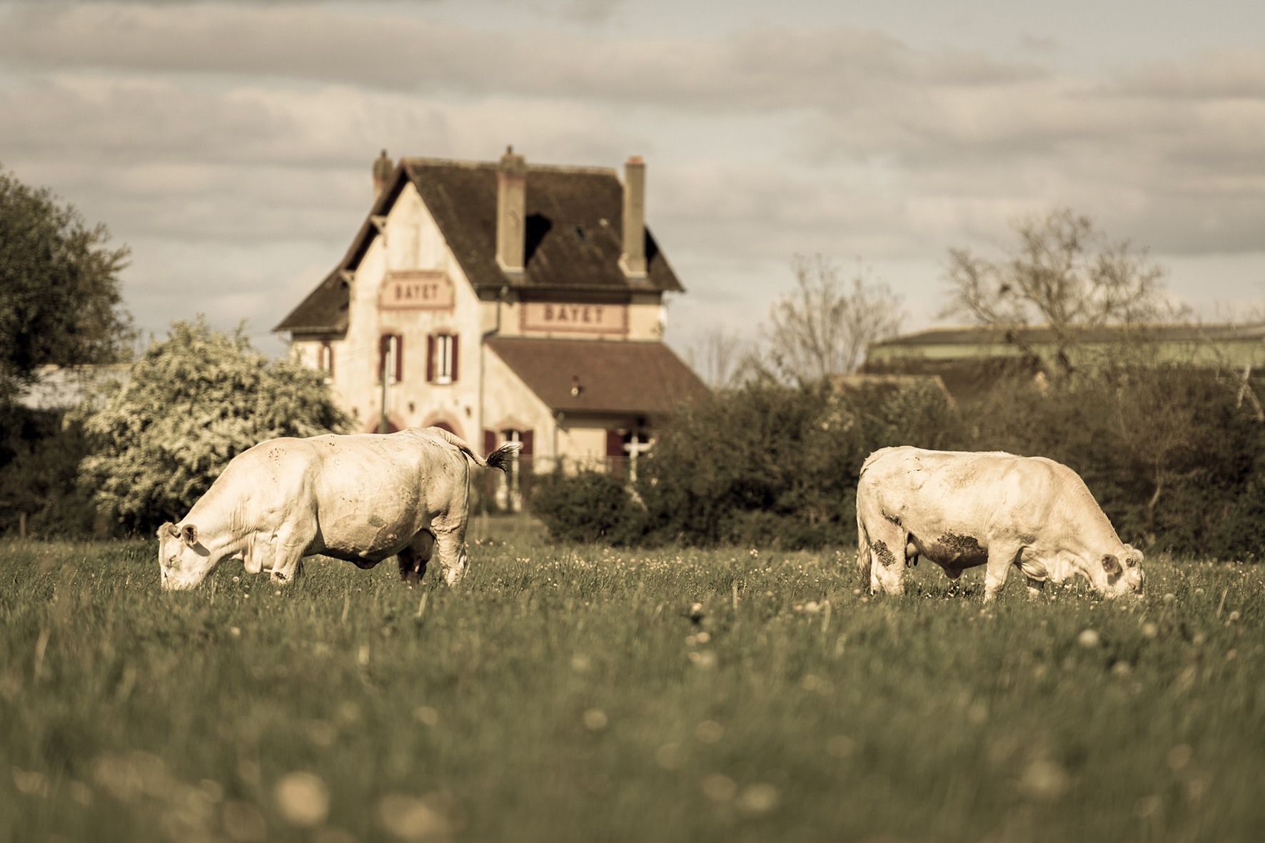 Photographe : Taking the country roads n°23