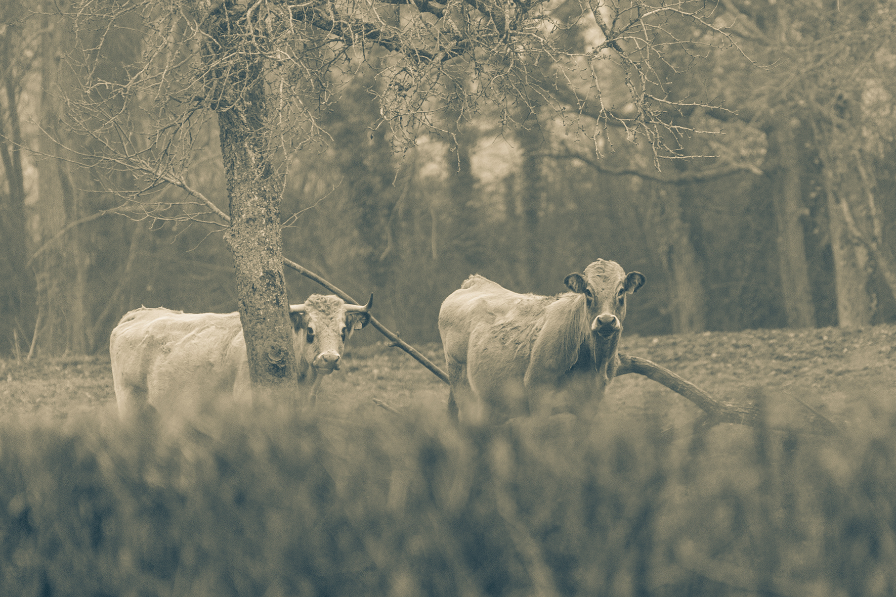 Photographe : Taking the country roads n°4