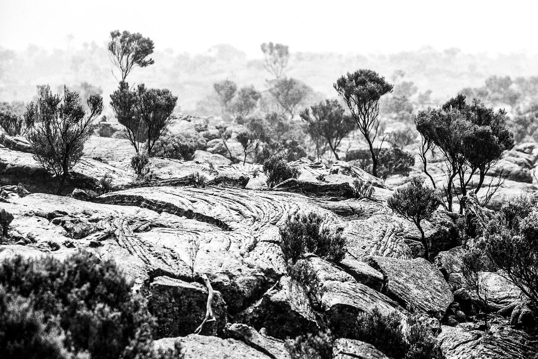 Photographe : Le graphisme naturel n°1